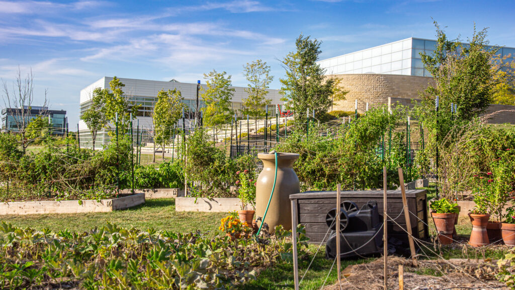 Community garden with various plants growing under blue sky.